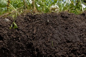 Подбор почвы для обустройства мемориала и высадки растений